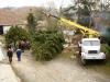 Kácení vánočního stromu - 28.11.2015